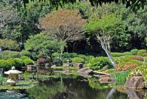 mt-Cootha-gardens